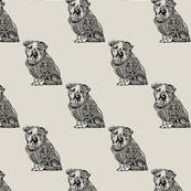 Polynesian English Bulldog