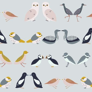 birds of scandinavia - rows (cool)