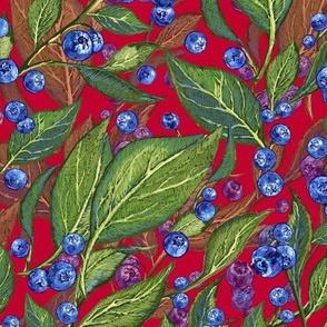 Festive Blueberries     Red