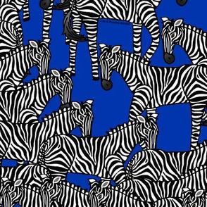 Zebras on Blue