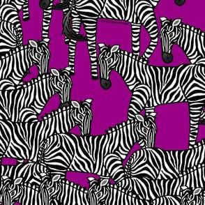 Zebras on Purple