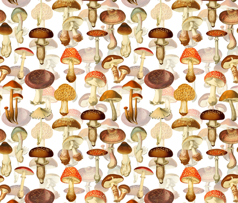 Vintage Hand Drawn Botnical Fungus Mushrooms Double On