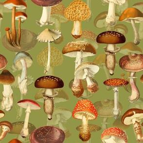 "10"" vintage hand drawn botnical fungus mushrooms double on green-Antique mushroom fabric,mushrooms fabric"