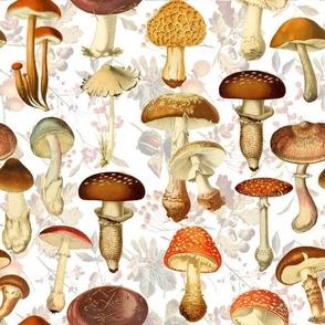 "10"" vintage hand drawn botnical fungus mushrooms double on white-Antique mushroom fabric,mushrooms fabric"