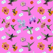 Hummers and flowers - Starthroat pink