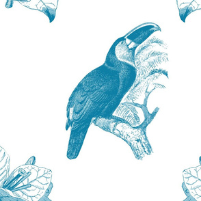 Toucan Blue