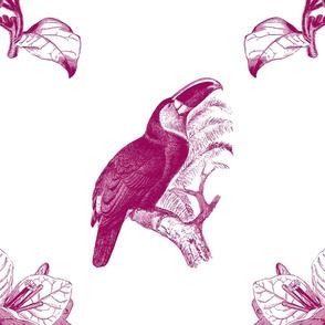 toucan fuchsia