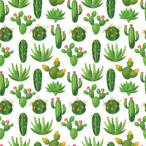 Desert Cactus on White