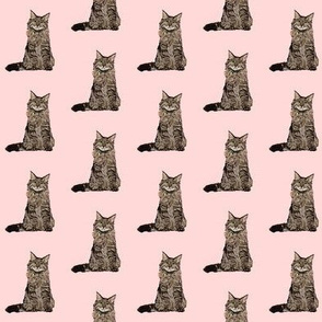 maine coon cat fabric - maine coon fabric, maine coon pattern, cat fabric, cat lady fabric, cat lady design - pink