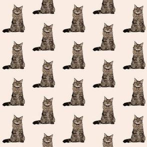 maine coon cat fabric - maine coon fabric, maine coon pattern, cat fabric, cat lady fabric, cat lady design - tan