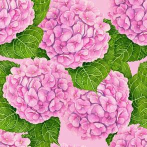 Hydrangea waterolor pattern