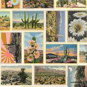 Painted Desert* || vintage postcards ephemera cactus saguaro coyote sunrise sunset shooting star flowers western cowboy cowgirl 70s retro
