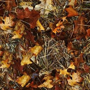 Forest Floor - Maine Woods