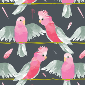 Galahs grey background by Mount Vic and Me