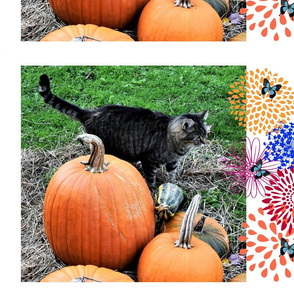 paws and pumpkins