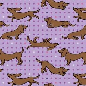 Dachshund Playing on Purple Polka Dots