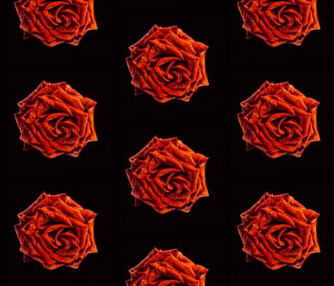 Rose fabric by shadow-artist on Spoonflower - custom fabric