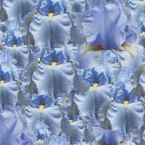 infinite irises