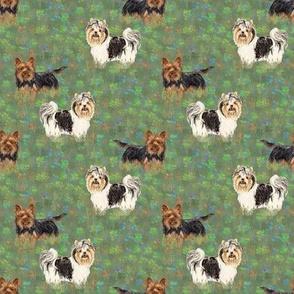 Custom Biewer and Standard Yorkshire Terriers in Wildflower Field