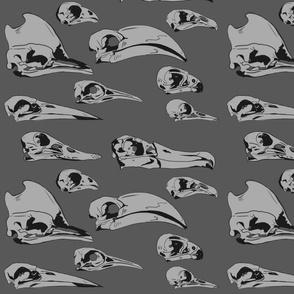 Birds skulls grey