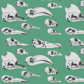 Birds skulls bright