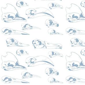 Bird skulls blue and white