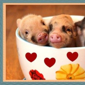 Three Little Piggies ....