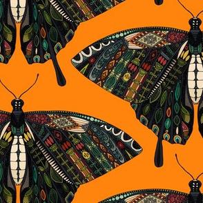 swallowtail butterfly turmeric