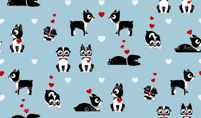 Valentine Boston Terrier
