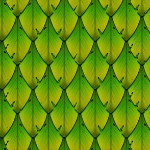 Leafy Scale A 1