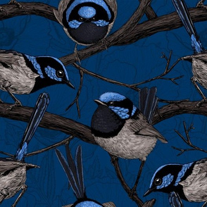 Night fairy wrens