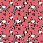 Anhinga ~ Pink Mellon