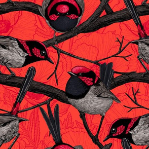 Fairy wrens on red