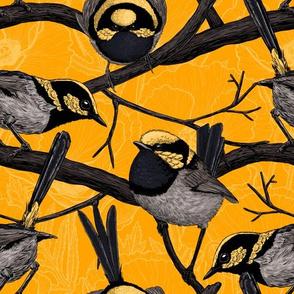 Fairy wrens on yellow