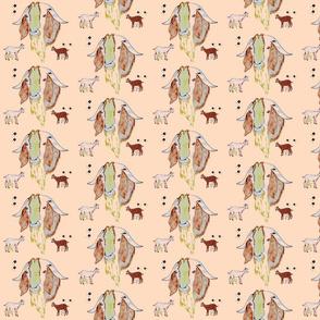 small Ewe-Ram-Kid