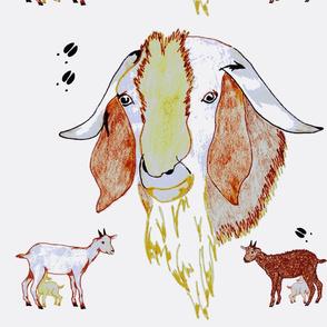 Doe-Ewe-Ram-Kid-
