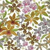 Rrtiny_animal_print_orchids_white_shop_thumb