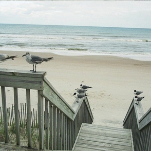SEAGULLS ON RAILINGS-PLACEMATS