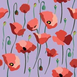 Poppy Field Blooming2