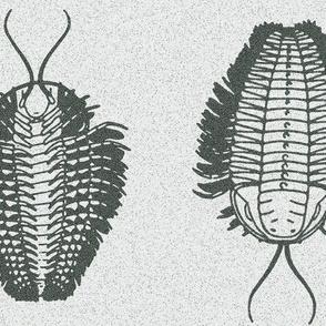 trilobite_arachnida_NY