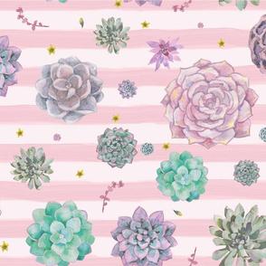 Pink Stripe Succulents