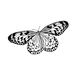 Butterfly - larger scale