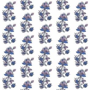 indian dandelion blue and blush