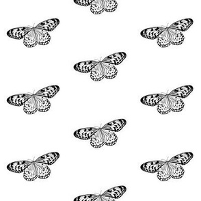 Solo Butterfly - smaller scale