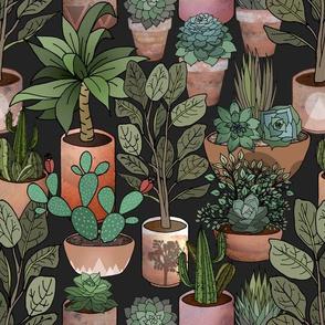 Desert Garden in Terra Cotta Pots