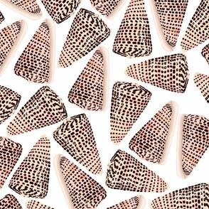 Cone Shells White