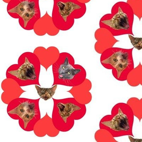 Mouthy Cats Valentine