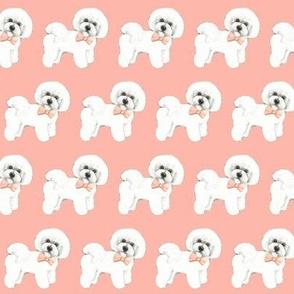 Bichon Frise dog, coral bows