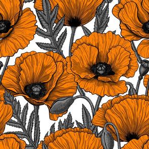 Orange poppy garden