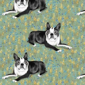 Custom Bella Boston Terrier on Wildflowers